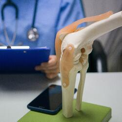 Knee anatomy model