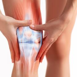 knee structure-2
